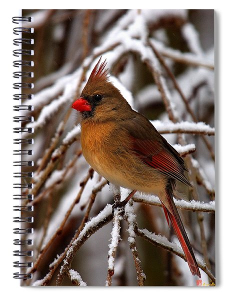 Snowbirds--cardinal Dsb025 Spiral Notebook