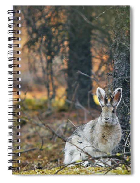 Snowshoe Hare Spiral Notebook