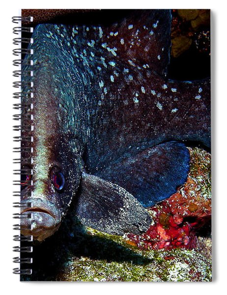 Soapfish Spiral Notebook