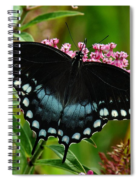 Spicebush Swallowtail Din038 Spiral Notebook