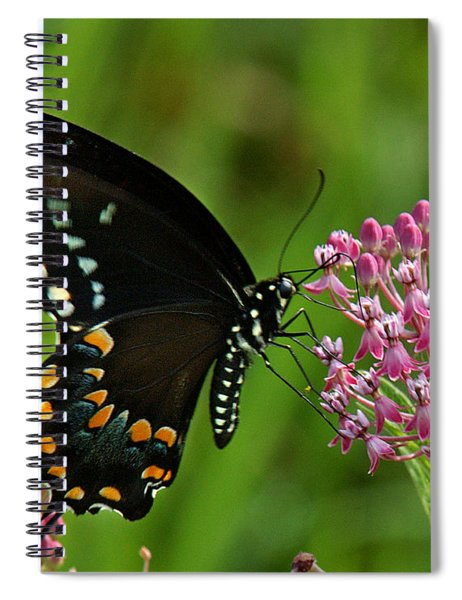 Spicebush Swallowtail Din039 Spiral Notebook