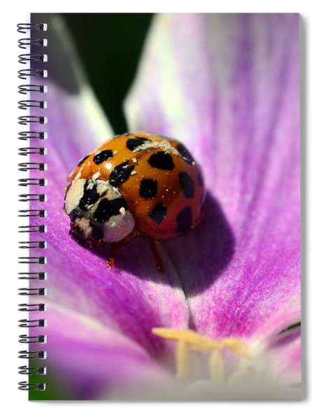Spotted Lady Spiral Notebook