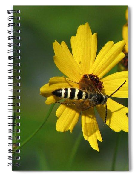 Striped Bee On Wildflower Spiral Notebook