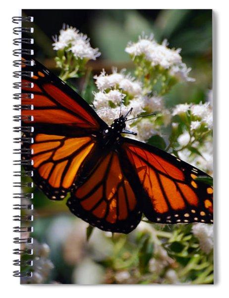 Summers Treat Spiral Notebook