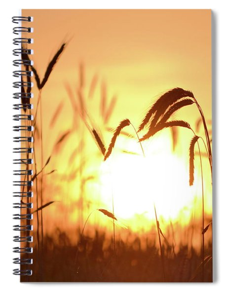 Sunset Rye IIi Spiral Notebook