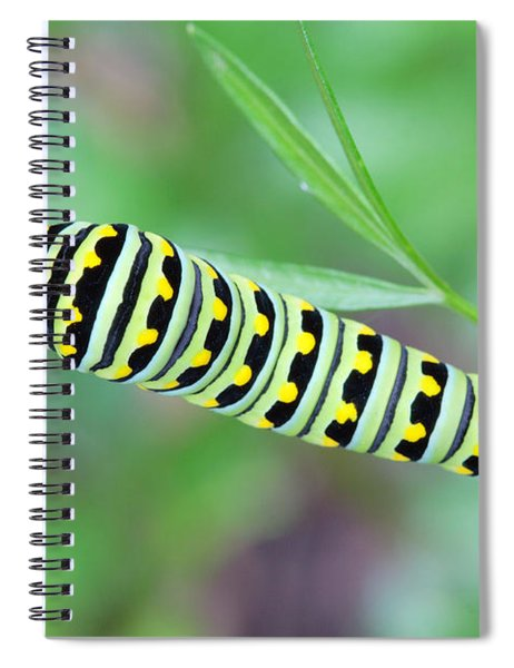 Swallowtail Caterpillar On Parsley Spiral Notebook