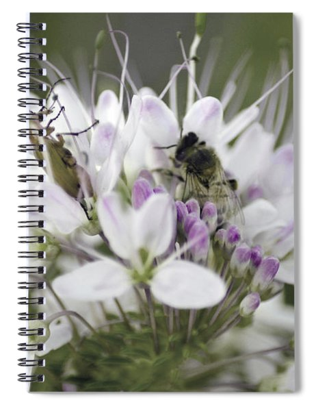The Beetle And The Bee Spiral Notebook