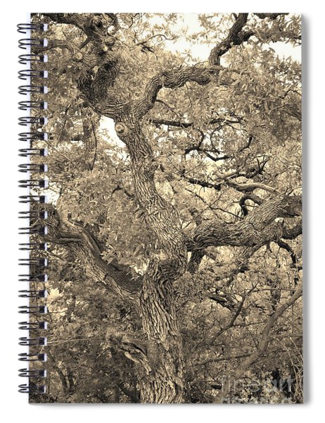 The Wicked Tree Spiral Notebook
