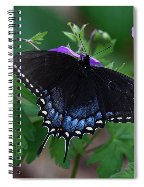 Tiger Swallowtail Female Dark Form On Wild Geranium Spiral Notebook