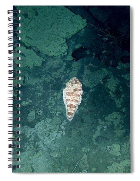 Tongue Fish In Hydrothermal Area Spiral Notebook