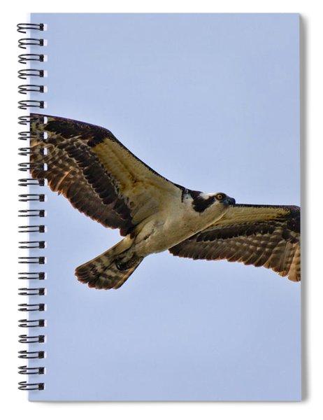 Topsail Osprey Spiral Notebook