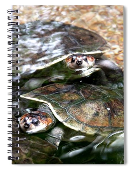 Turtle Two Turtle Love Spiral Notebook