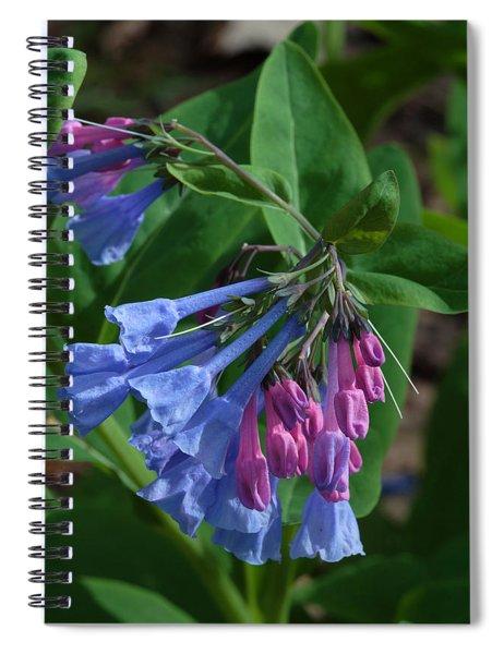 Virginia Bluebells Spiral Notebook