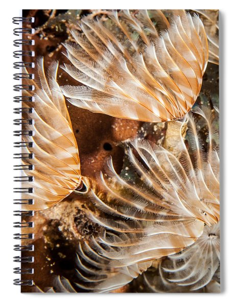 Waving In The Current Spiral Notebook