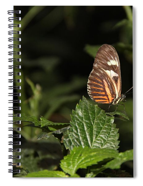 What Is My Next Step Spiral Notebook