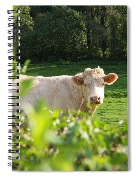 White Cow Spiral Notebook