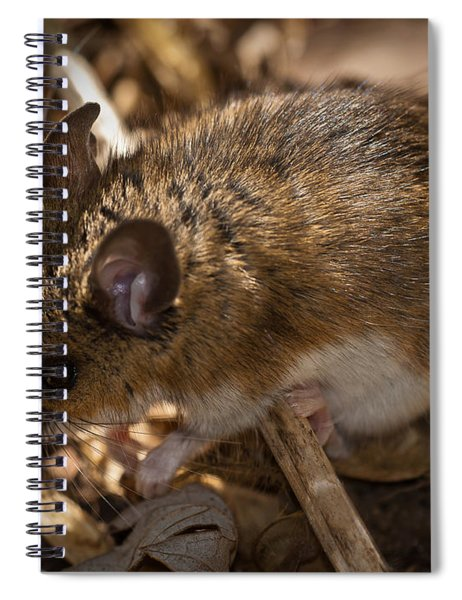 White-footed Mouse Spiral Notebook