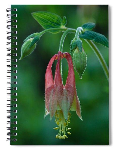 Wild Columbine Flower Spiral Notebook