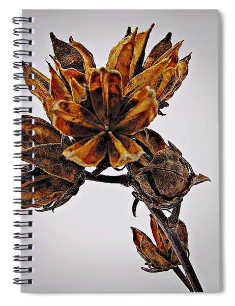 Winter Dormant Rose Of Sharon Spiral Notebook