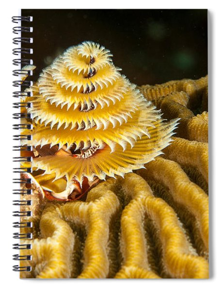 Yellow Christmas Tree Spiral Notebook