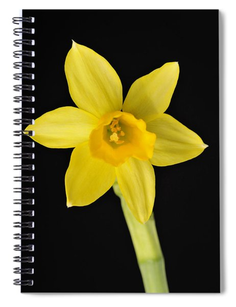 Yellow Daffodil Black Background Spiral Notebook