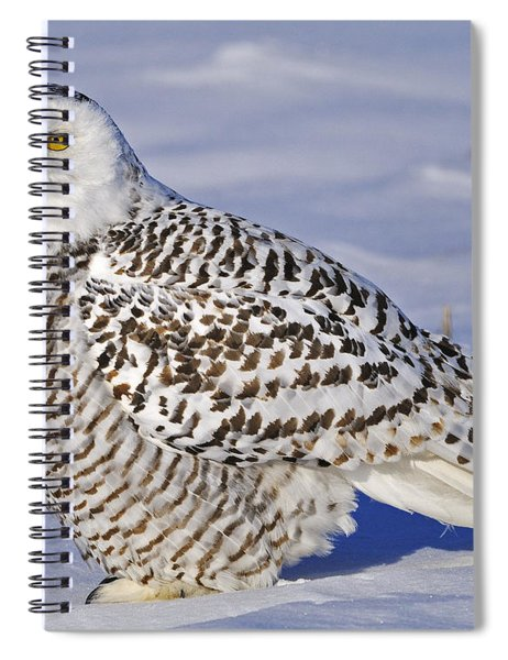 Young Snowy Owl Spiral Notebook