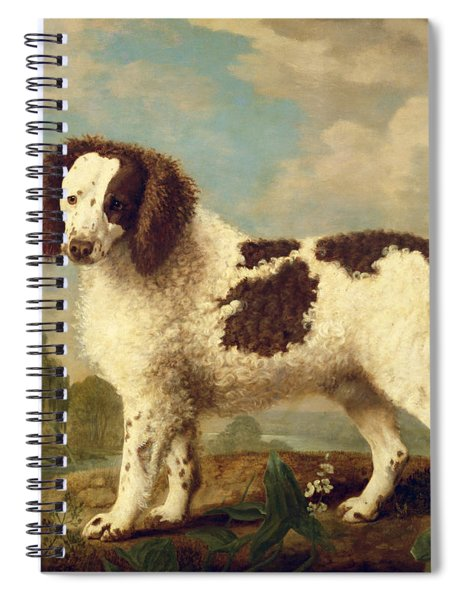 Brown And White Norfolk Or Water Spaniel Spiral Notebook