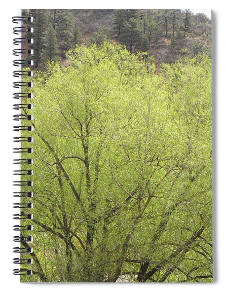 Tree Ute Pass Hwy 24 Cos Co Spiral Notebook