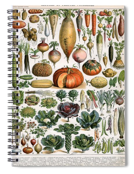 Illustration Of Vegetable Varieties Spiral Notebook