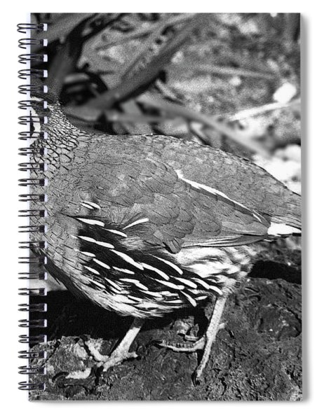 02_introduction Spiral Notebook