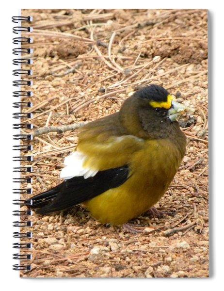 Evening Grossbeak Divide Co Spiral Notebook