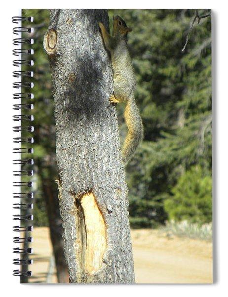 Squirrel Home Divide Co Spiral Notebook