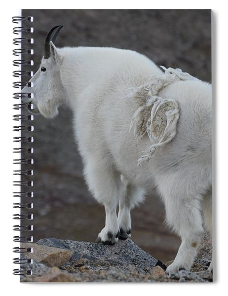 Mountain Goat Mnt Evans Co  Spiral Notebook