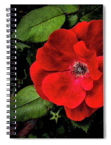 A Knockout Spiral Notebook