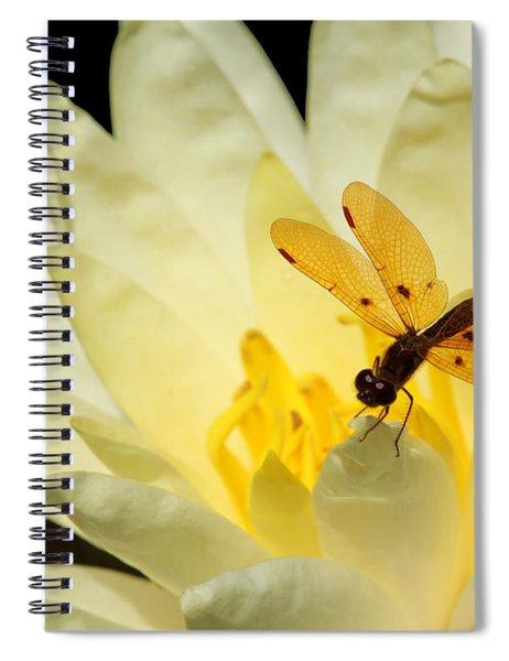 Amber Dragonfly Dancer 2 Spiral Notebook