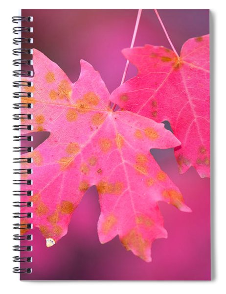 Autumn Color Maple Tree Leaves Spiral Notebook
