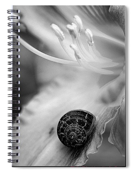 B And White Floral With Snail Spiral Notebook