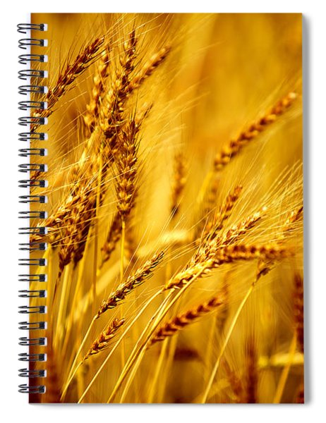 Bearded Barley Spiral Notebook