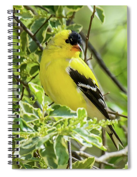 Spiral Notebook featuring the photograph Blending In by Robert L Jackson