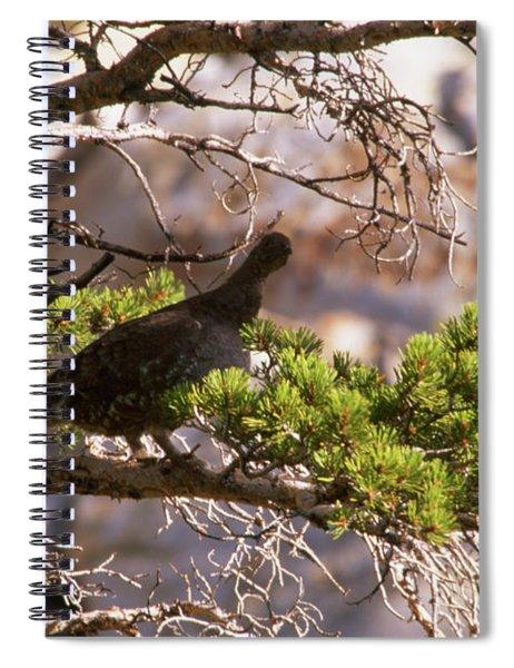 Blue Grouse Spiral Notebook