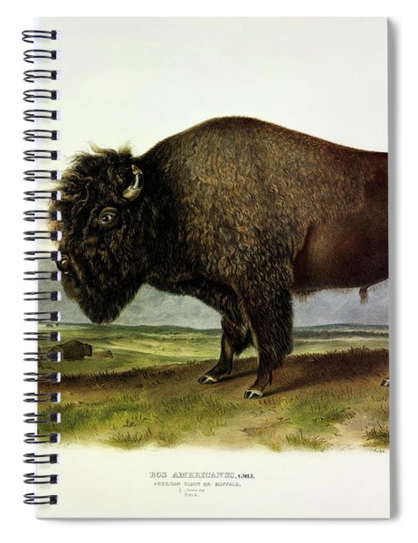 Bos Americanus, American Bison, Or Buffalo Spiral Notebook