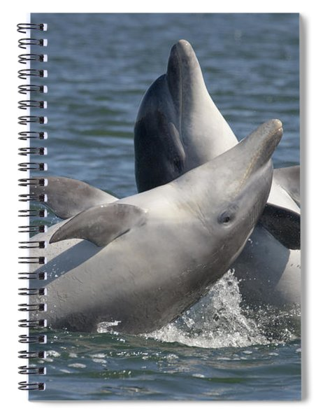 Bottlenose Dolphins  - Scotland  #15 Spiral Notebook