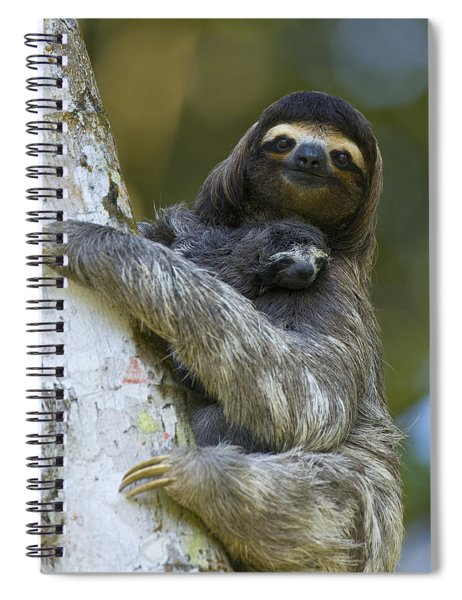 Brown-throated Three-toed Sloth Spiral Notebook