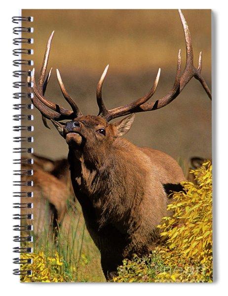 Bull Elk Cervus Elaphus Wild Wyoming Spiral Notebook