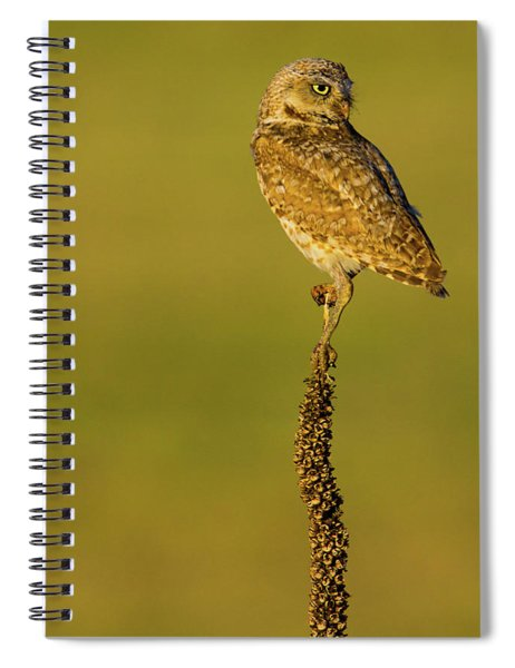 Spiral Notebook featuring the photograph Burrowing Owl In Sunlight by John De Bord