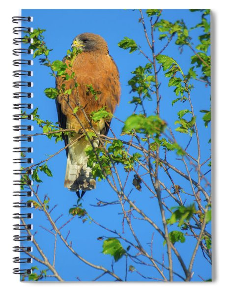 Spiral Notebook featuring the photograph Colorado Swainson's Hawk by John De Bord