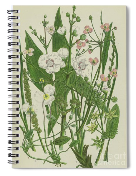Common Star Fruit, Greater Water Plantain And Other Plants Spiral Notebook