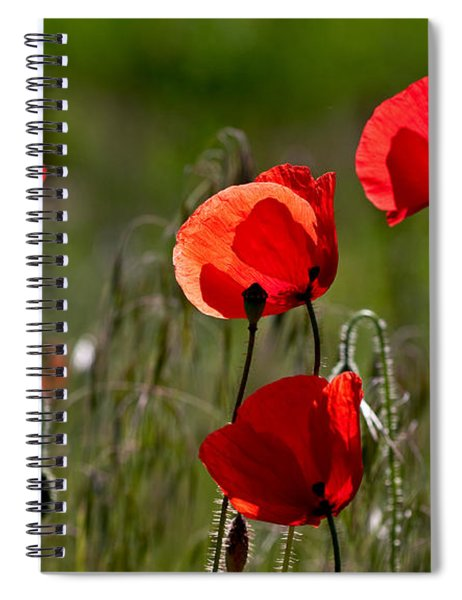Corn Poppy Flowers Spiral Notebook by Nailia Schwarz