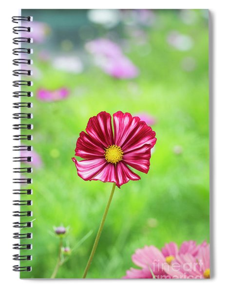 Cosmos Velouette Spiral Notebook