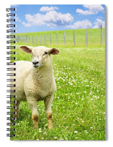 Cute Young Sheep Spiral Notebook